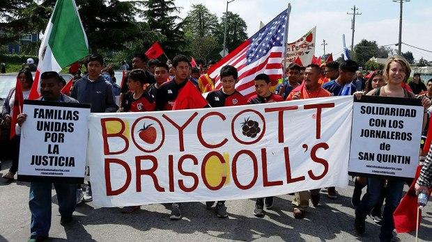 boycott-driscolls_1_4-3-16