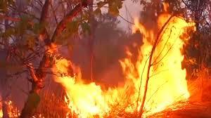 rainforest fires 1